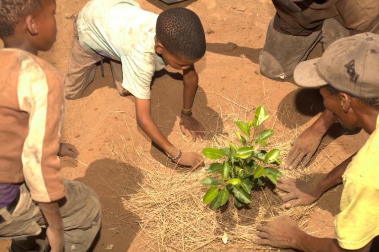 School children are planting the fruit trees